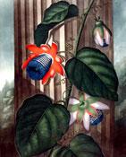 thornton-flower