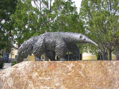 uci-anteater