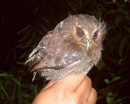 strange_owl.jpg